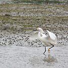 Snowy Egret by Jan  Wall