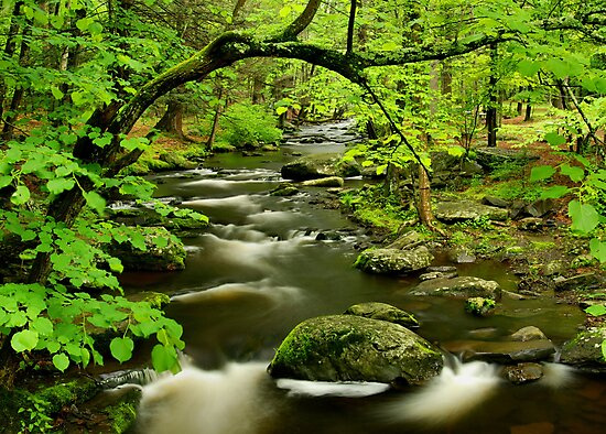Mountain Stream by Stephen Vecchiotti