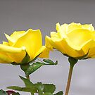 Two Roses and a Mantis......!! by Roy  Massicks