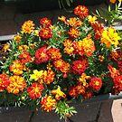 Glorious Marigolds by Kathryn Jones