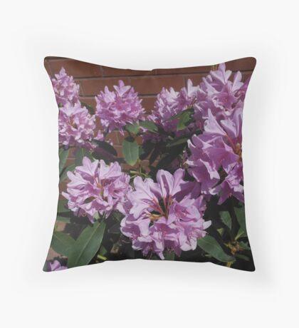 Rhododendron genießt den Sonnenschein Kissen