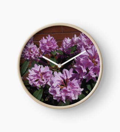 Rhododendron genießt den Sonnenschein Uhr