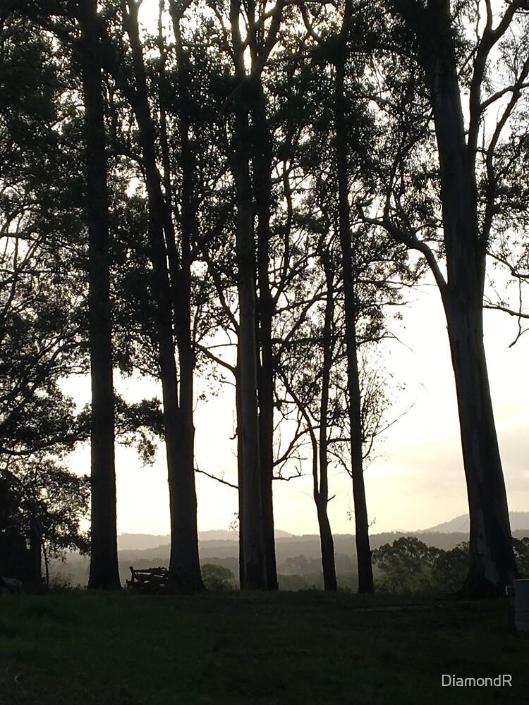Trees by DiamondR