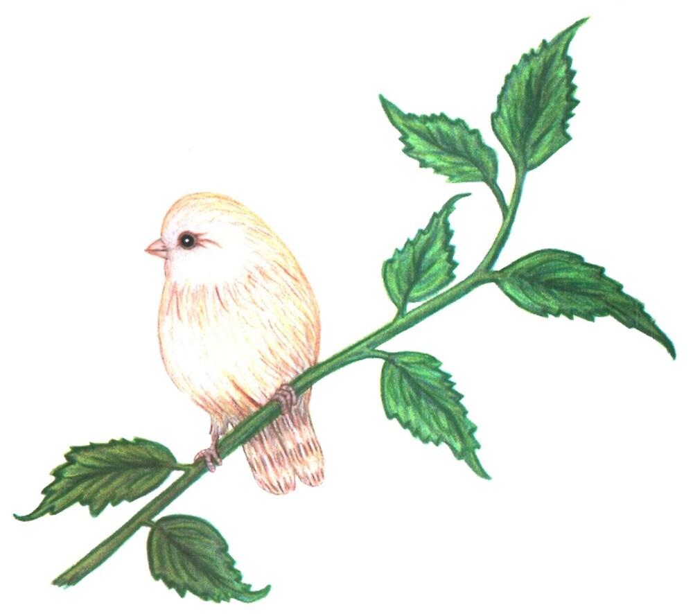 Cherubim Bird by Cletas-Birds