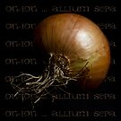 Onion ~ Allium sepa by Rosalie Dale