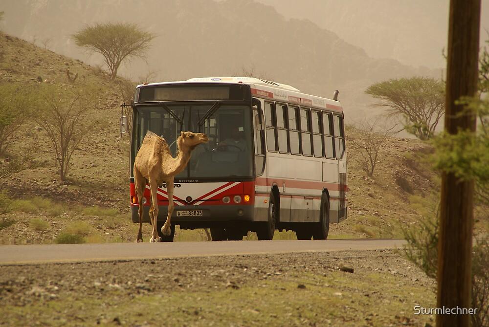 Camel crossing by Sturmlechner