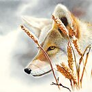 Song Dog - coyote  by Peter Williams