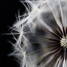 Seeds by Sue Hammond