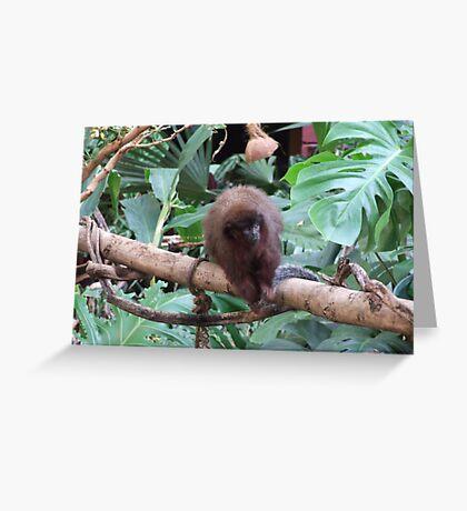 Red Titi Monkey Greeting Card