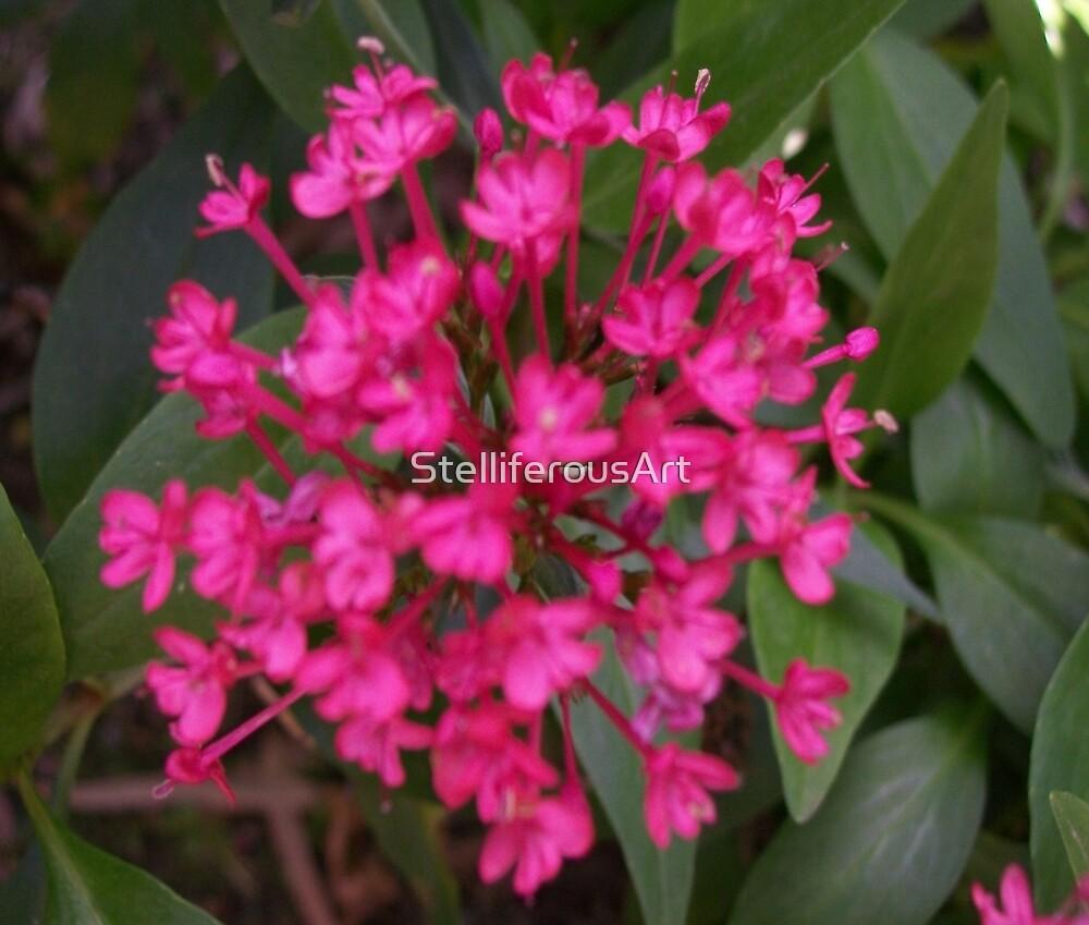 Pink Flower by StelliferousArt