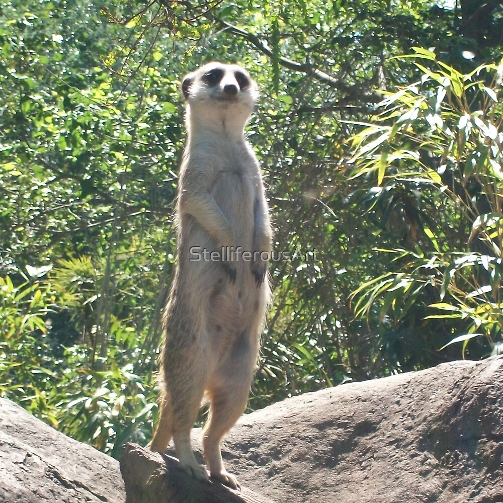 Meerkat on a Rock by StelliferousArt