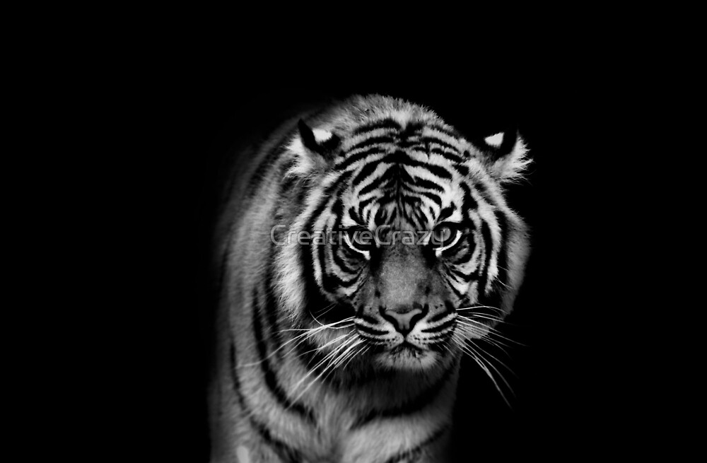 King Of The Jungle by CreativeCrazy