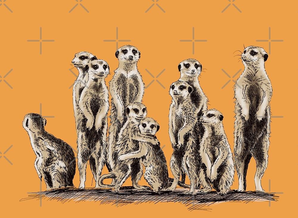 meerkat by sibosssr