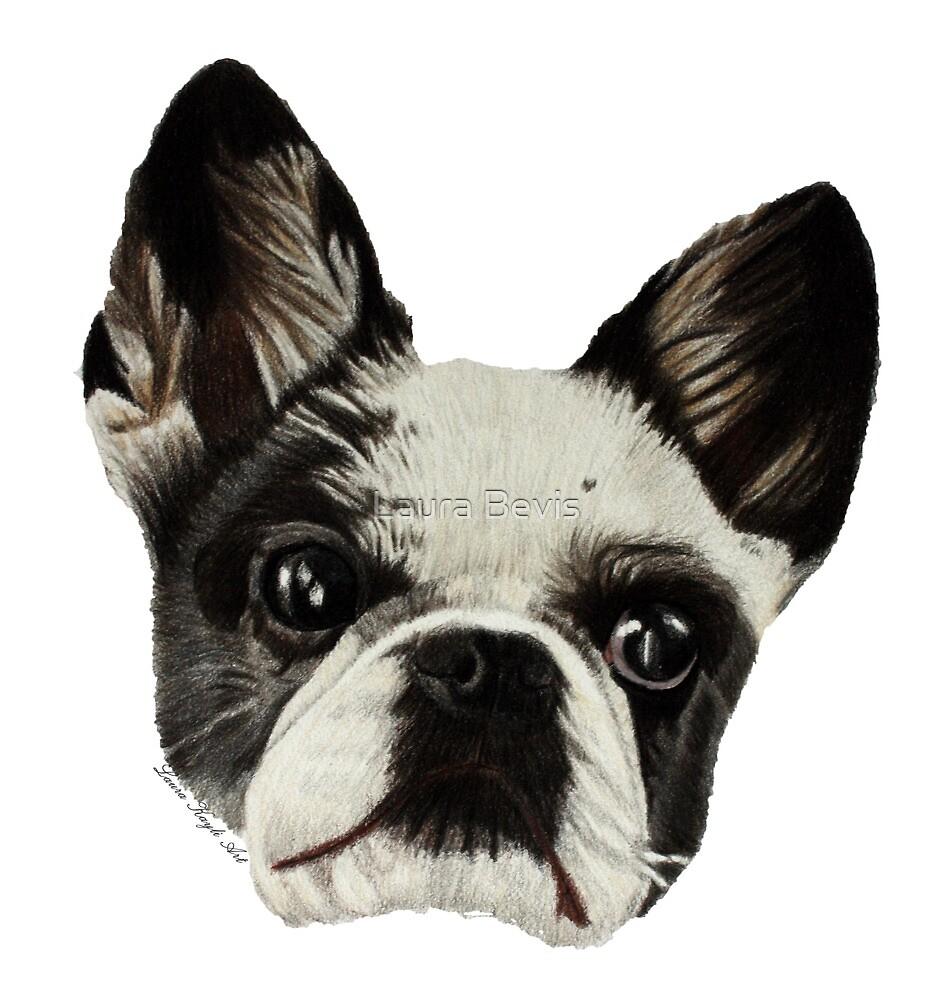 Elly the Frenchie by Laura Bevis