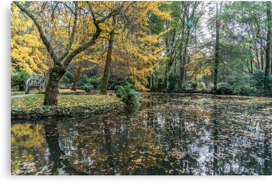Alfred Nicholas Memorial Gardens - Autumn colours by Michelle Golden