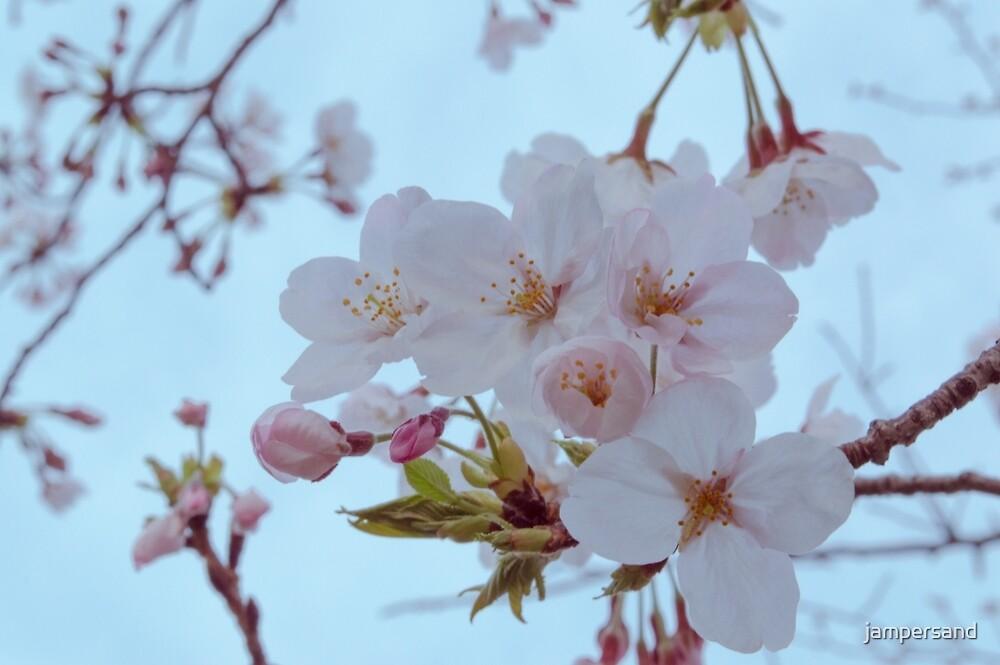 Cherry Blush by jampersand