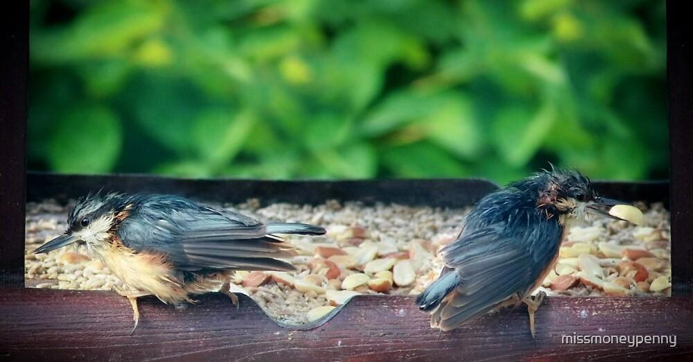 Nuthatch chicks by missmoneypenny
