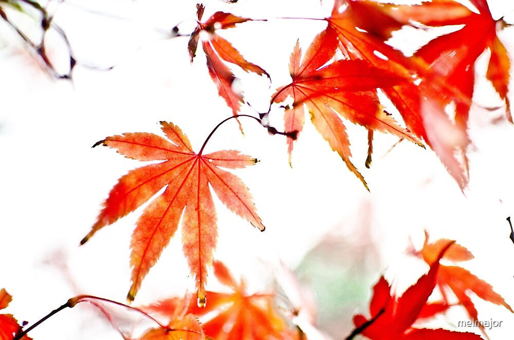 Japanese maple leaves by melmajor