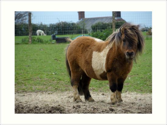 Tiny Pony Club. by Heath-Photos
