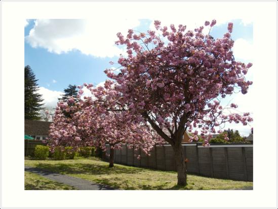 Spring has Sprung. by Heath-Photos