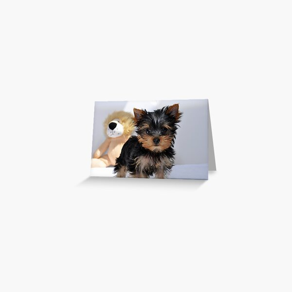 Watchout there is a lion behind you! Greeting Card