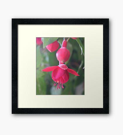 Hummingbird Feeder Framed Print