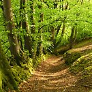 Heale Wood by Lorraine Parramore