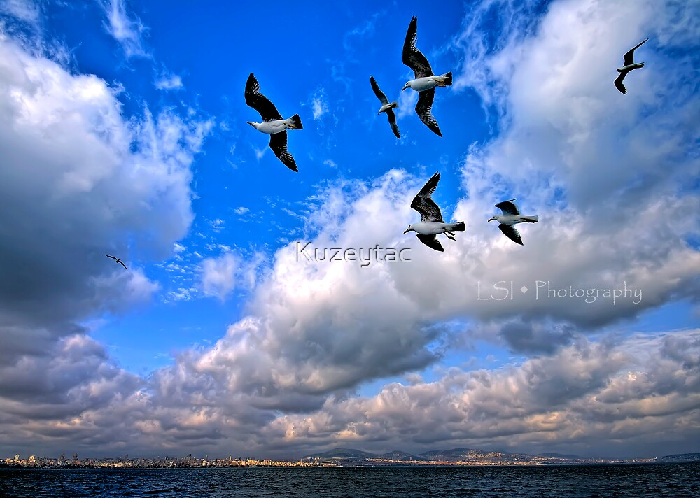 Freedom Under My Wings by Kuzeytac