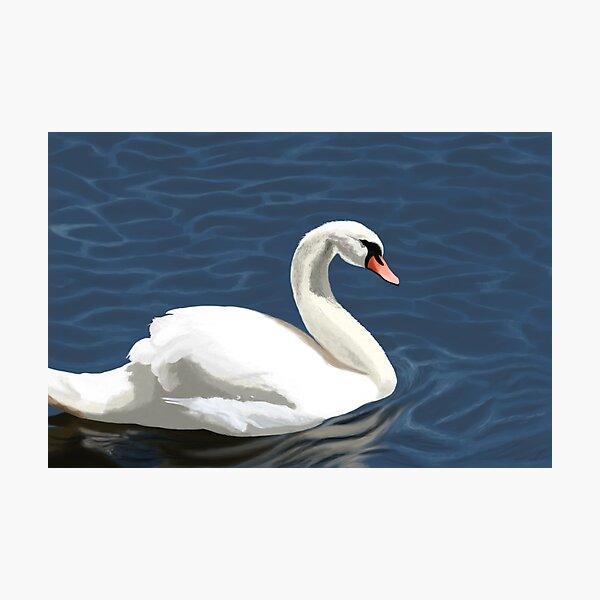Elegant Swan Photographic Print