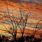 Sunrise Splendour - Gunnedah NSW Australia by Bev Woodman