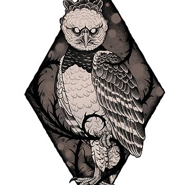 Harpy Eagle by mdcindustries