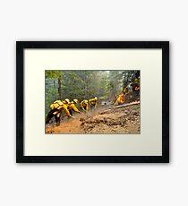 Fire Fight Framed Print