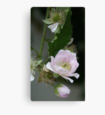 Black Rasberries in bloom; LOVES PINK! La Mirada, CA U.S.A. All Rights Reserved Hedger Photography Canvas Print