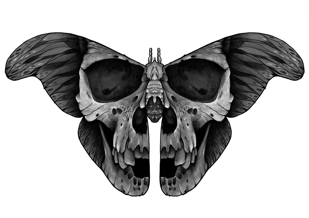 Chaos Moth by Jon MDC