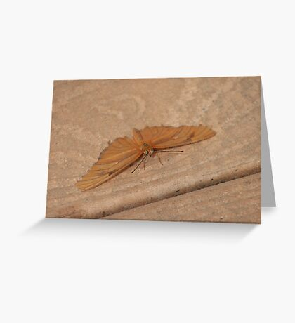 Camoflauged Greeting Card