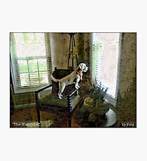 The Watchdog Photographic Print