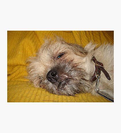 Sleepy....Soooo sleeeepy.... Photographic Print
