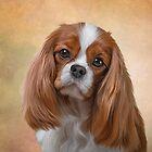 Drawing Dog breed Cavalier King Charles Spaniel  by bonidog