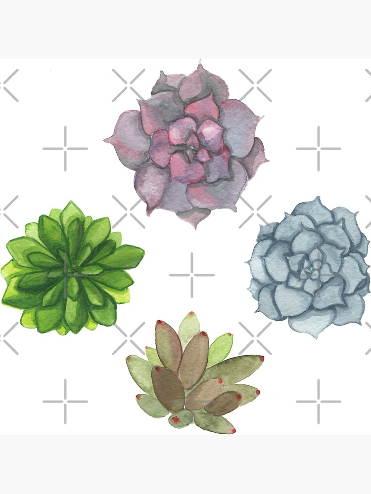 Succulents by PicajoArt