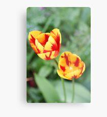 """Two Tone Tulips"" Metal Print"