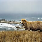 High on a Hill Stood a Lonely ... Sheep by sienebrowne