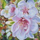 Fleurs de Pommier - Apple Blossoms by Dai Wynn
