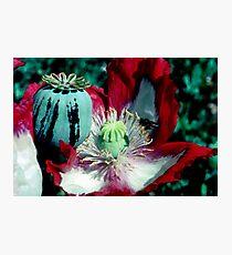 Opium poppy macro Photographic Print