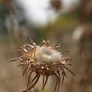 Spiky by Lior Goldenberg