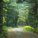 Where the Forest Path Leads  by Marie  Cardona
