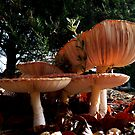 Amanita muscaria in the gardens of Larnach Castle by Magee