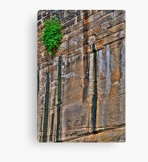 Nature prevails Canvas Print