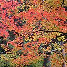 Autumn color by wilderpisces