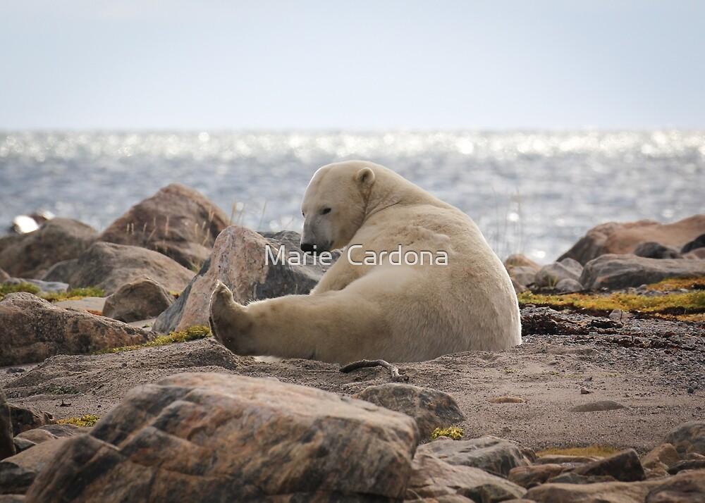Yoga Bear by Marie  Cardona