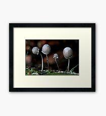 Fungi Season 24 Framed Print
